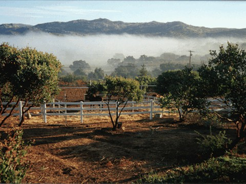 Maverick Ranch Fog